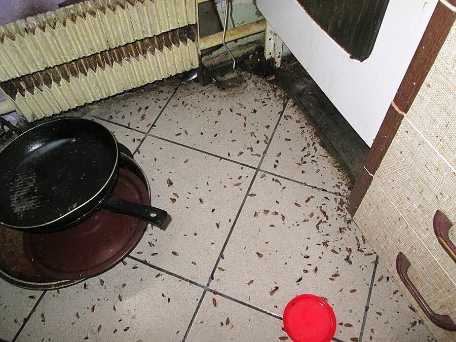 Как бороться с тараканами в общежитии — самые эффективные методы