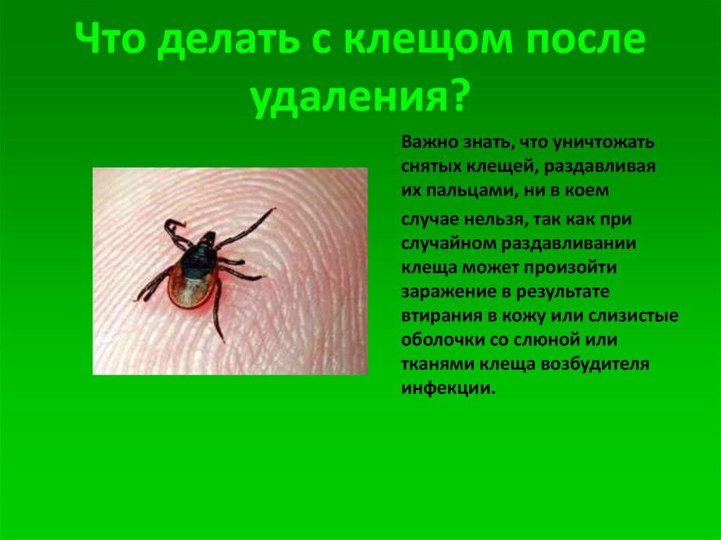 Клещевой энцефалит - симптомы, последствия, как не заразиться. что делать, если укусил клещ?