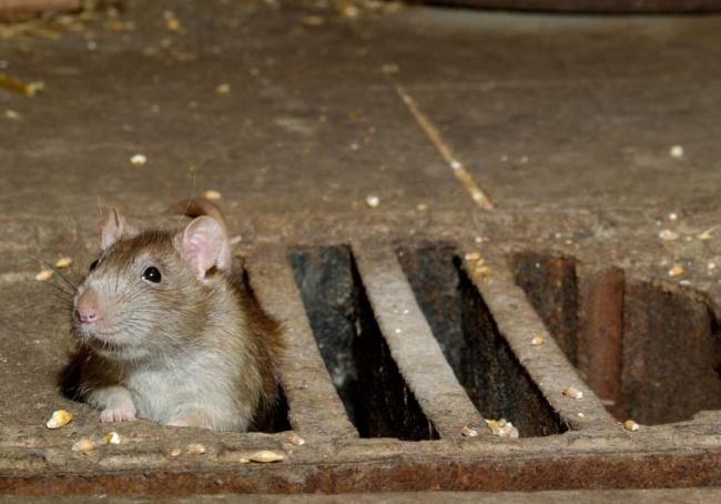 Как избавиться от мышей в погребе и подвале 2021