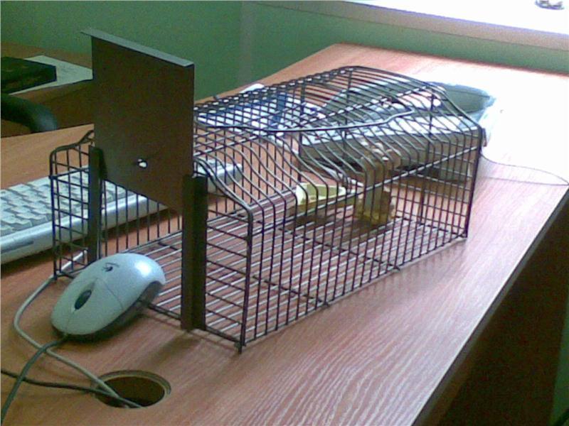 Крысоловка: самодельные устройства для поимки грызунов