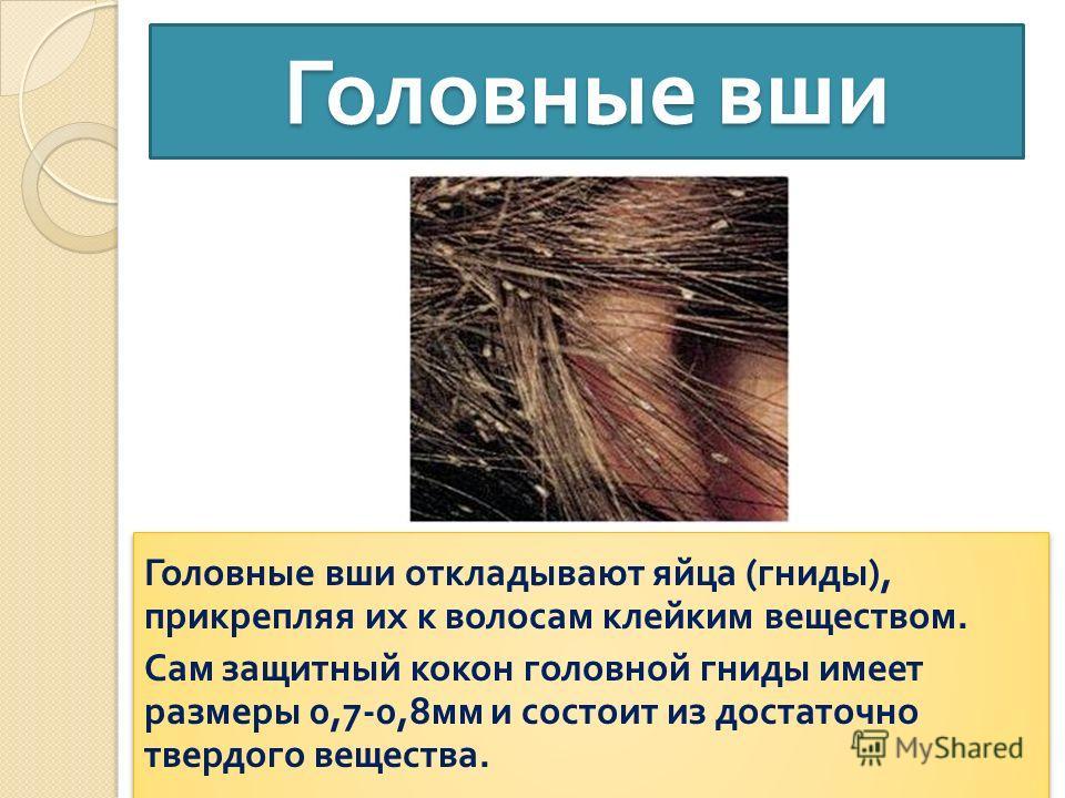 Разновидности вшей у человека: фото, описание и в чем их различие?