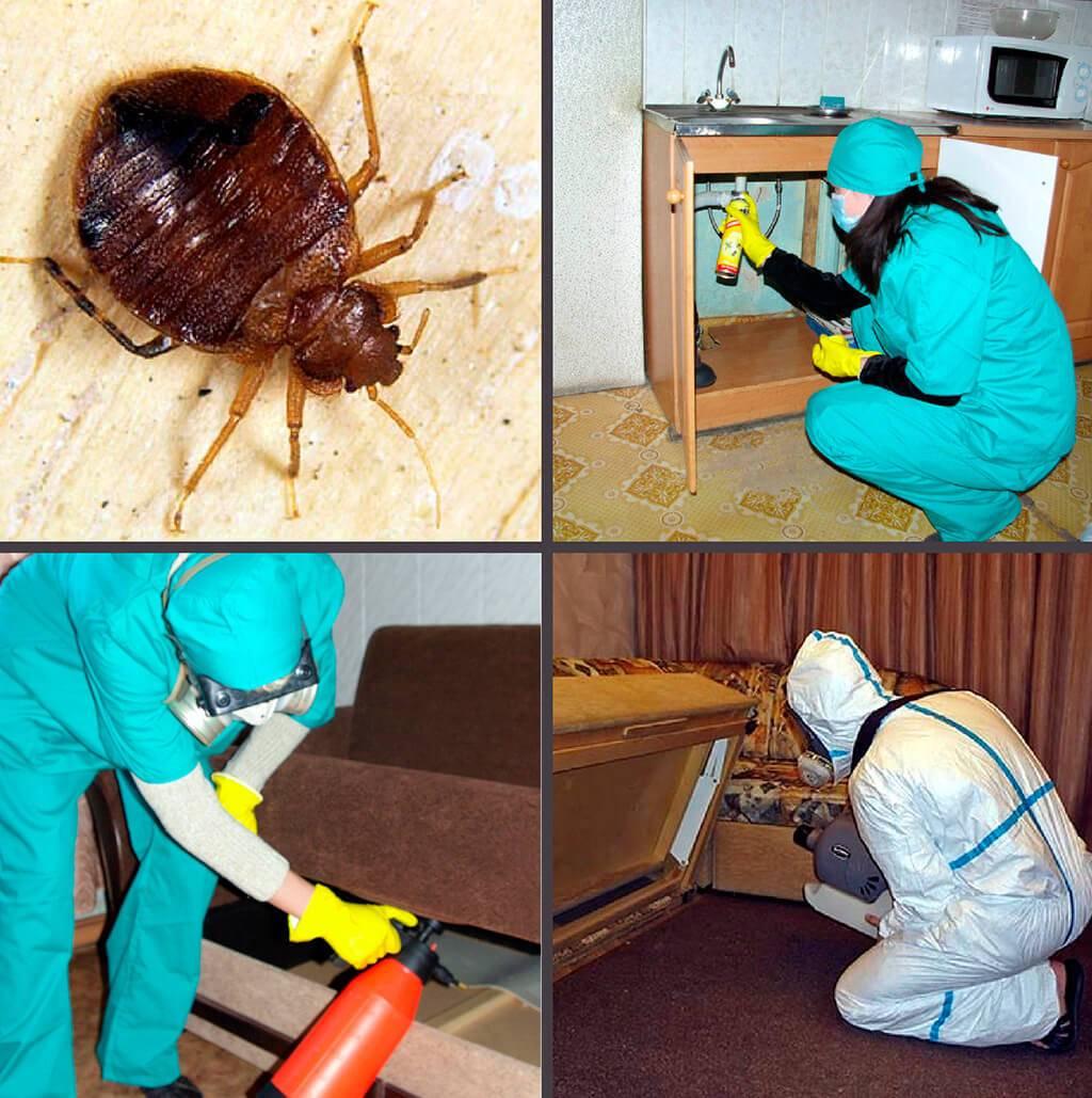 Народные средства от клопов: что точно поможет, как вывести насекомых в домашних условиях быстро