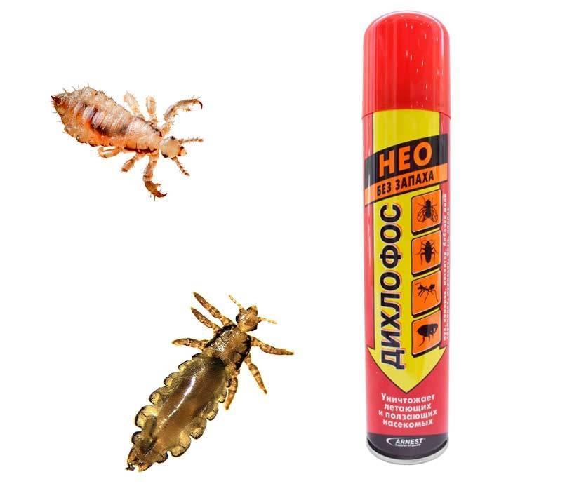 5 разновидностей дихлофоса от тараканов — какой лучше использовать?