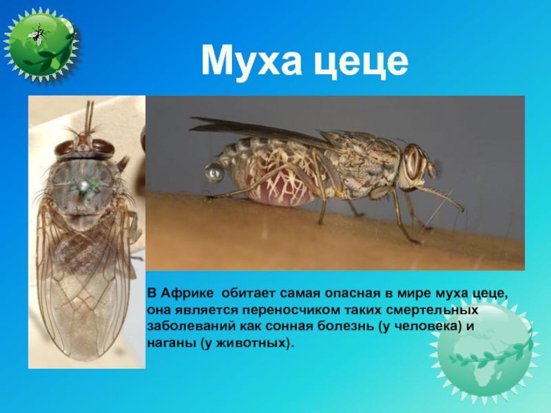 Что происходит с вашей едой, когда на неё садится муха?