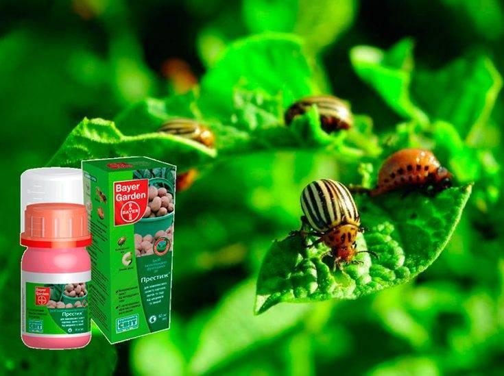 Препарат престиж от колорадского жука – эффективное средство с простой инструкцией по применению