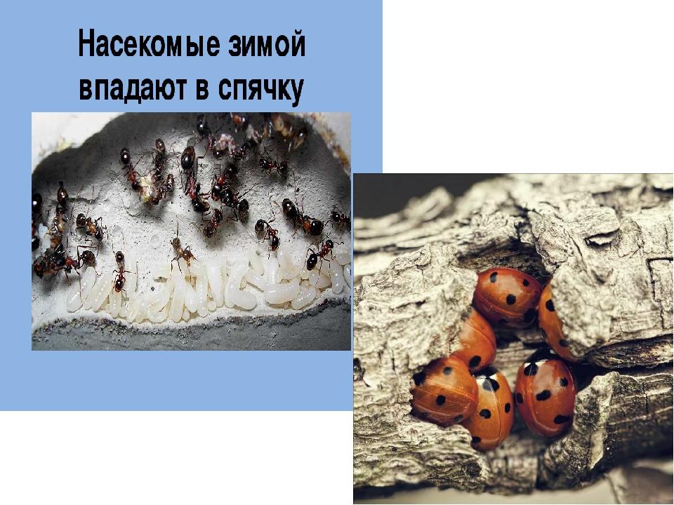 Разновидности, среда обитания и размножение ос. оса насекомое. образ жизни и среда обитания осы