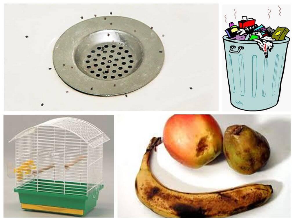 Как образуются мошки на фруктах
