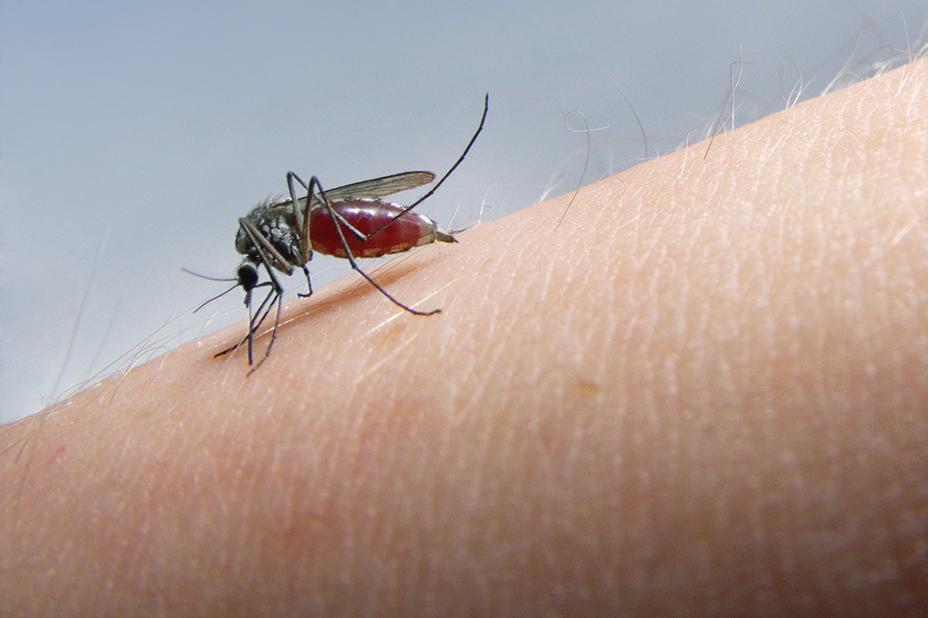 Комариный укус: через сколько дней проходит и какие бывают осложнения