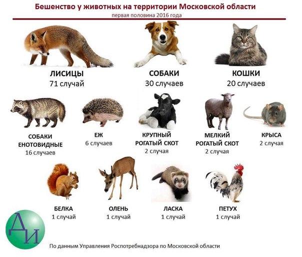 Нападают ли крысы на людей и существуют ли крысы-людоеды (фото и видео-материалы прилагаются)