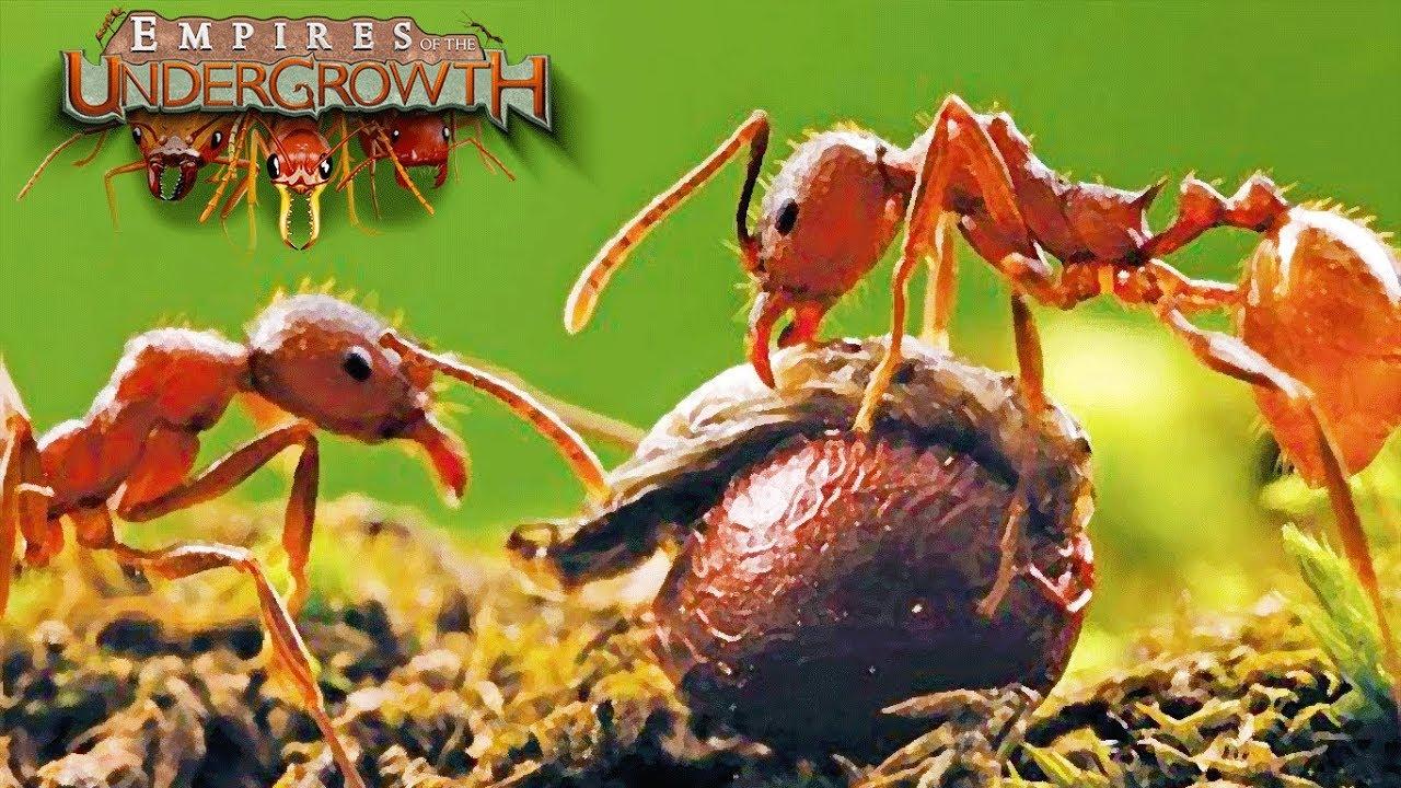 Кто ест муравьев: все, что нужно знать о врагах насекомых