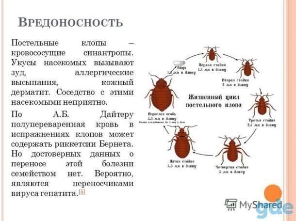 Дезинсекция от тараканов: как подготовить квартиру, средства и отзывы