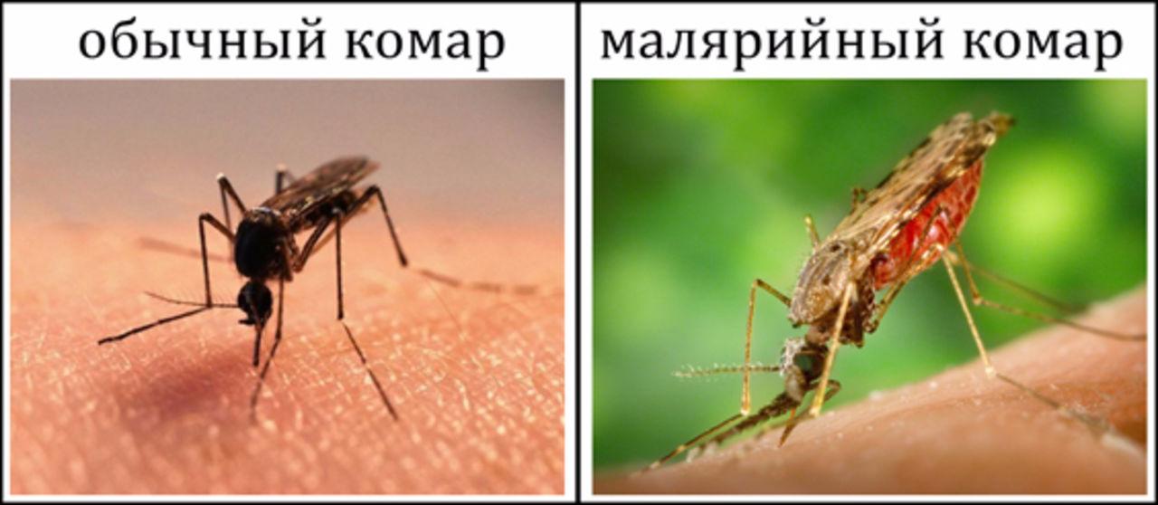 Передается ли гепатит через укус комара – всё о болезнях печени