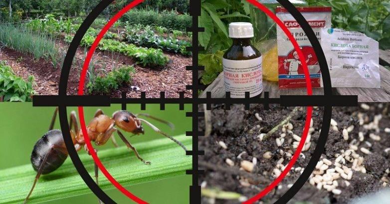 Как нужно применять корицу от муравьев на дачном участке