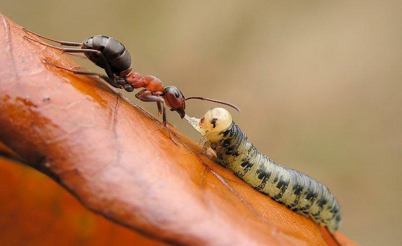 К чему снится муравейник?