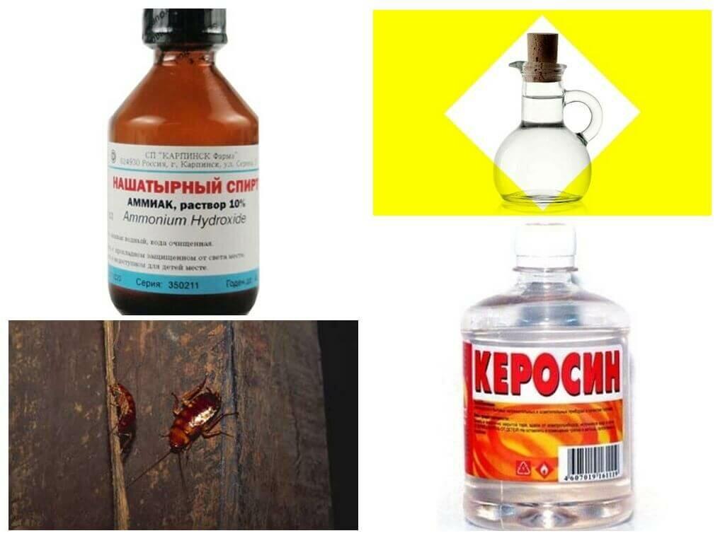 Как использовать аммиак против тараканов