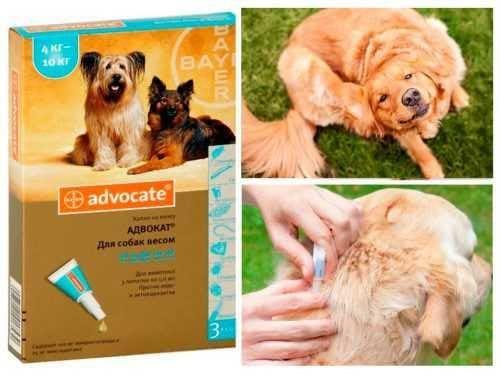 «адвокат» - капли для собак: инструкция по применению