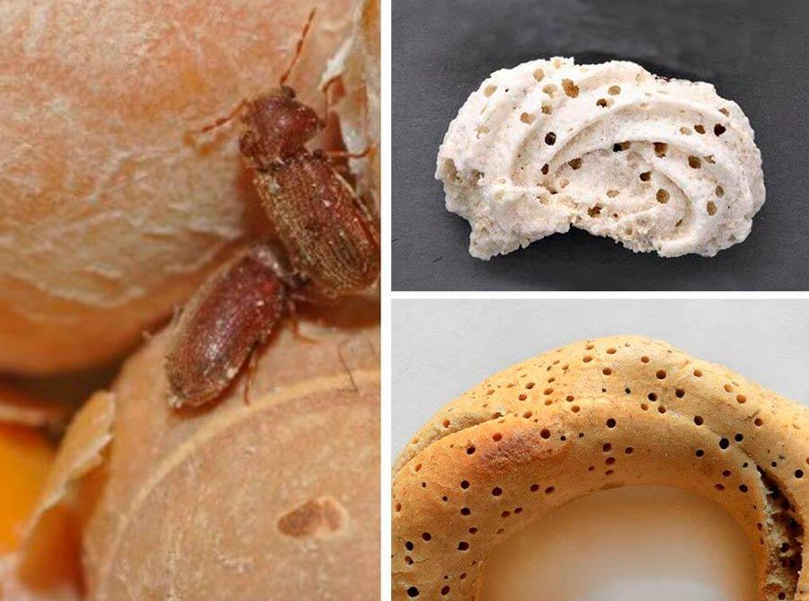 Как избавиться от жучков на кухне – 4-шаговая инструкция и фото