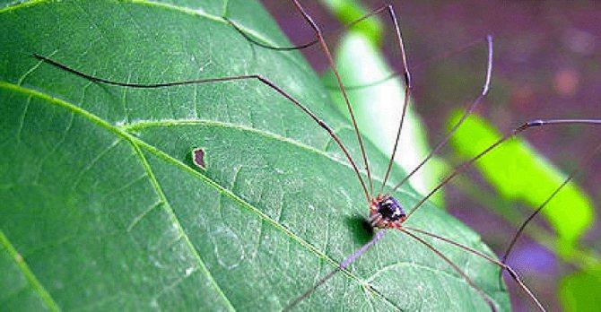 Что делать, если укусил паук: первая помощь пострадавшему