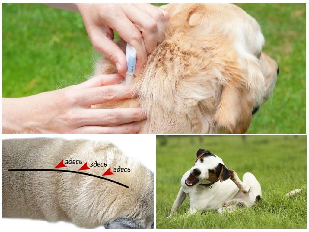 Как избавить собаку от клещей народными средствами