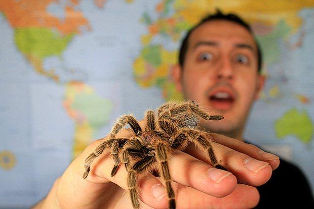 Как избавиться от арахнофобии? или как преодолеть страх к паукам