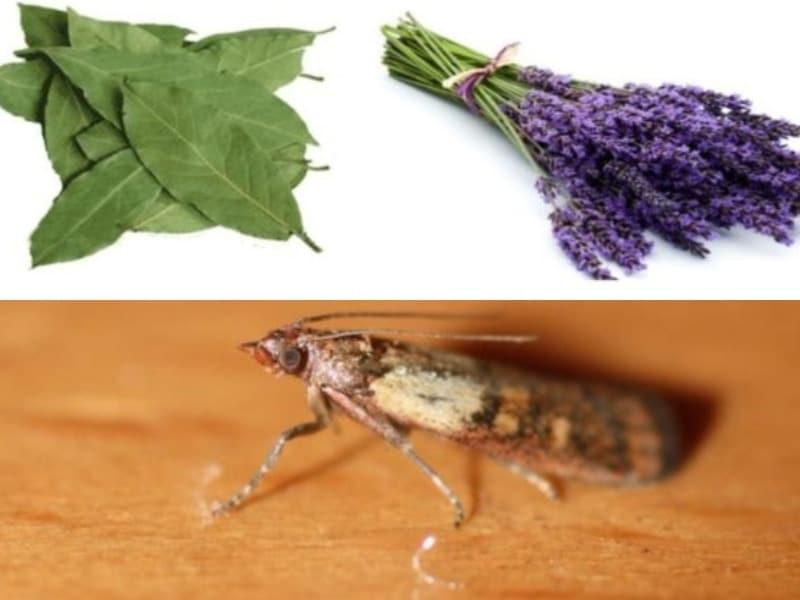 Что помогает от моли и ее личинок