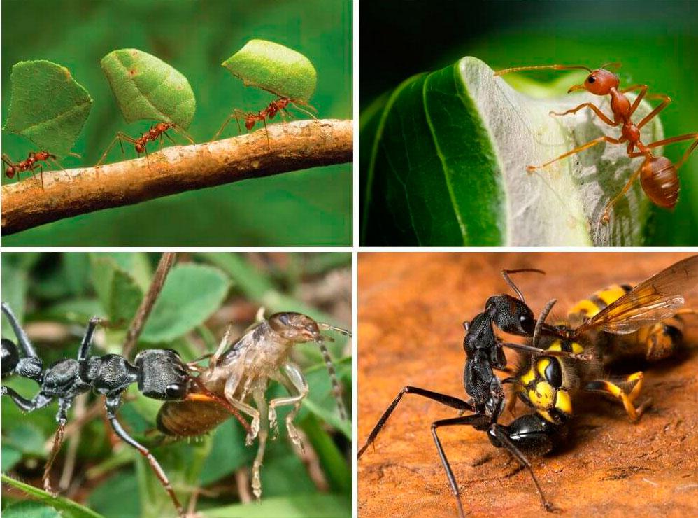 Что едят осы, могут ли они есть рыбу или мясо?