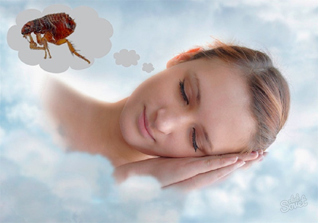 К чему снятся блохи: толкование снов о вшах и других паразитах для женщин и мужчин