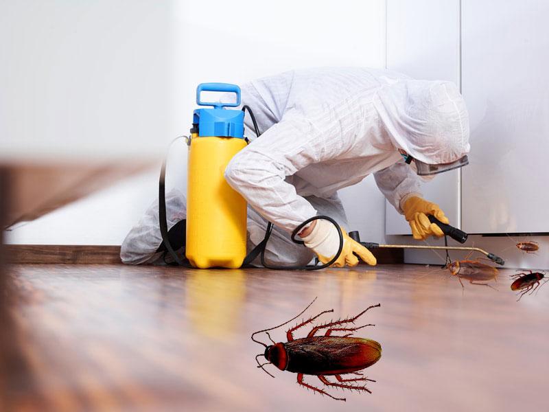 Что собой представляет дезинсекция от тараканов?