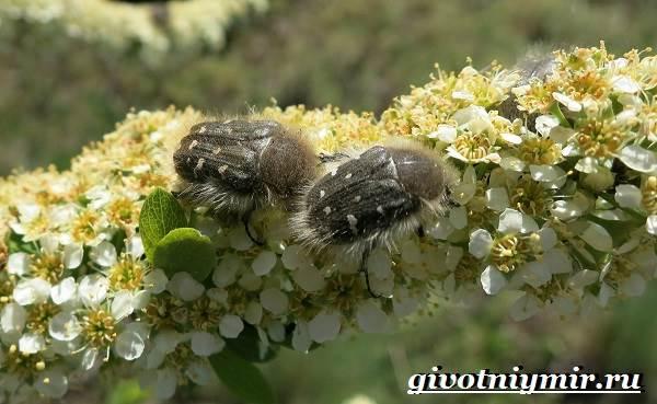 Распространенные жуки — вредители растений: описание насекомых и методы борьбы
