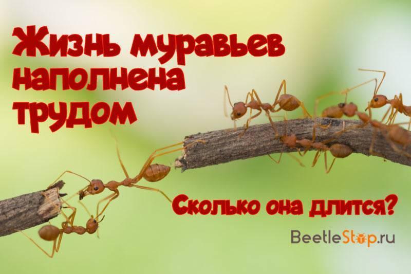 Жизнь муравьев – как она устроена в природе и наших домах