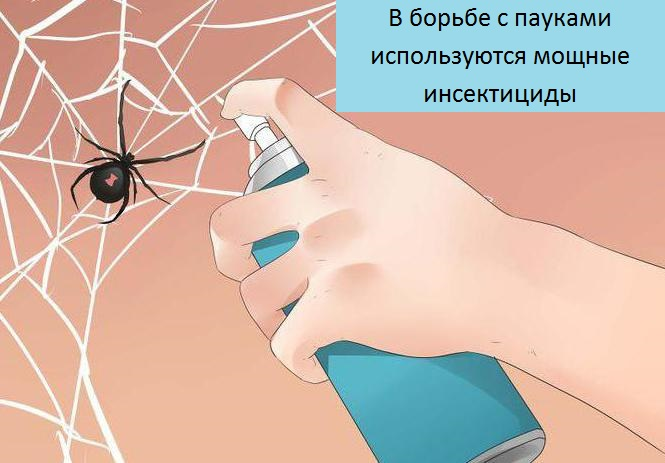 Пауки в доме: как избавиться, средство от пауков, народные приметы