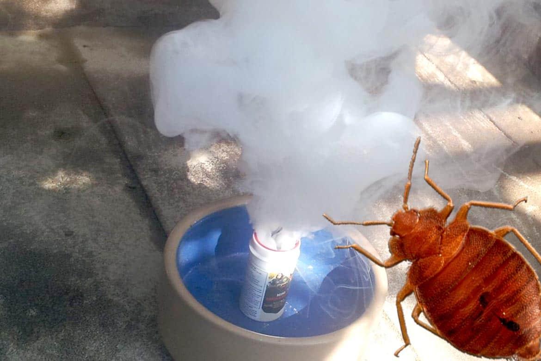 Дымовая шашка от клопов: помогает ли серная шашка, как происходит уничтожение