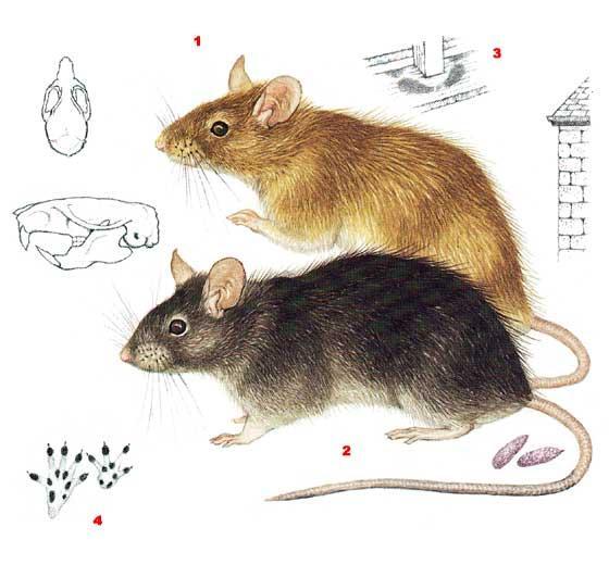 Что такое мышь и как она устроена   компьютер и жизнь