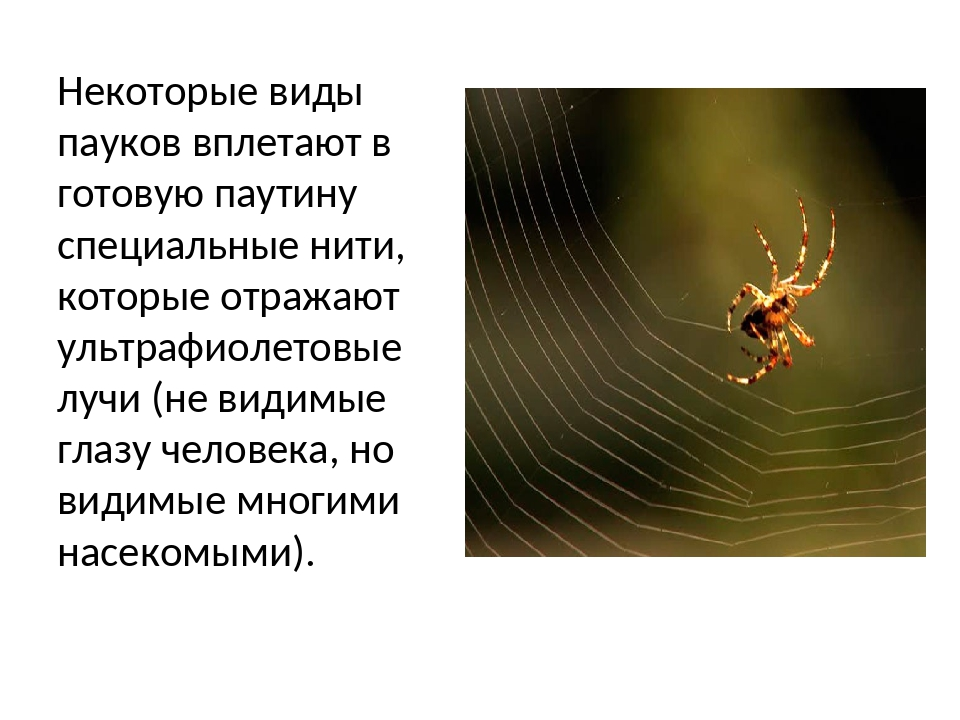 Паутина пауков