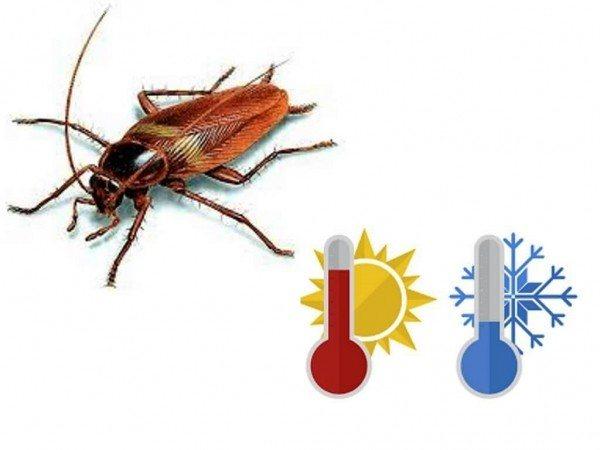 При какой температуре умирают тараканы: боятся ли тараканы холода