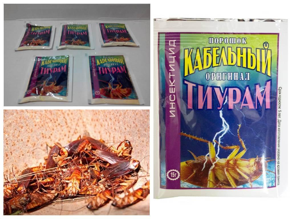 Порошок Тиурам от тараканов – эффективное, но опасное средство
