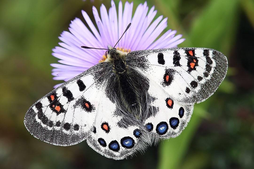 Как бороться с бабочками и гусеницами капустницы