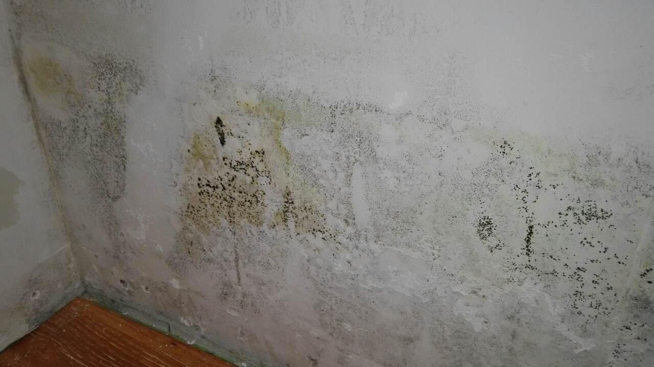Борьба с плесенью: как избавиться от сырости, влажности и грибка в жилом доме