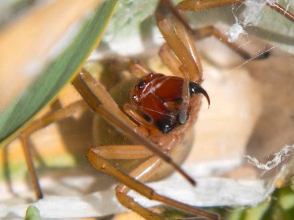 Виды пауков и помощь при укусах: профилактика, диагностика и лечение