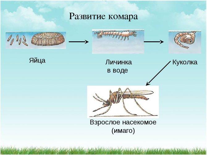 Откуда появляются в жилище комары