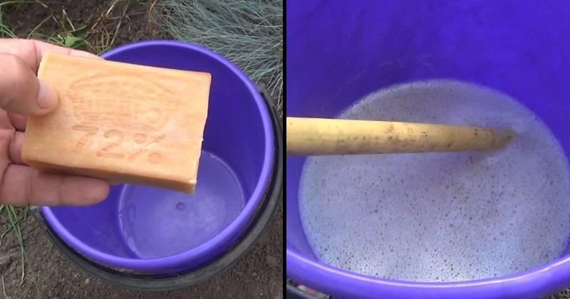 Какое мыло выбрать для борьбы с тлей: хозяйственное, дегтярное или зеленое?