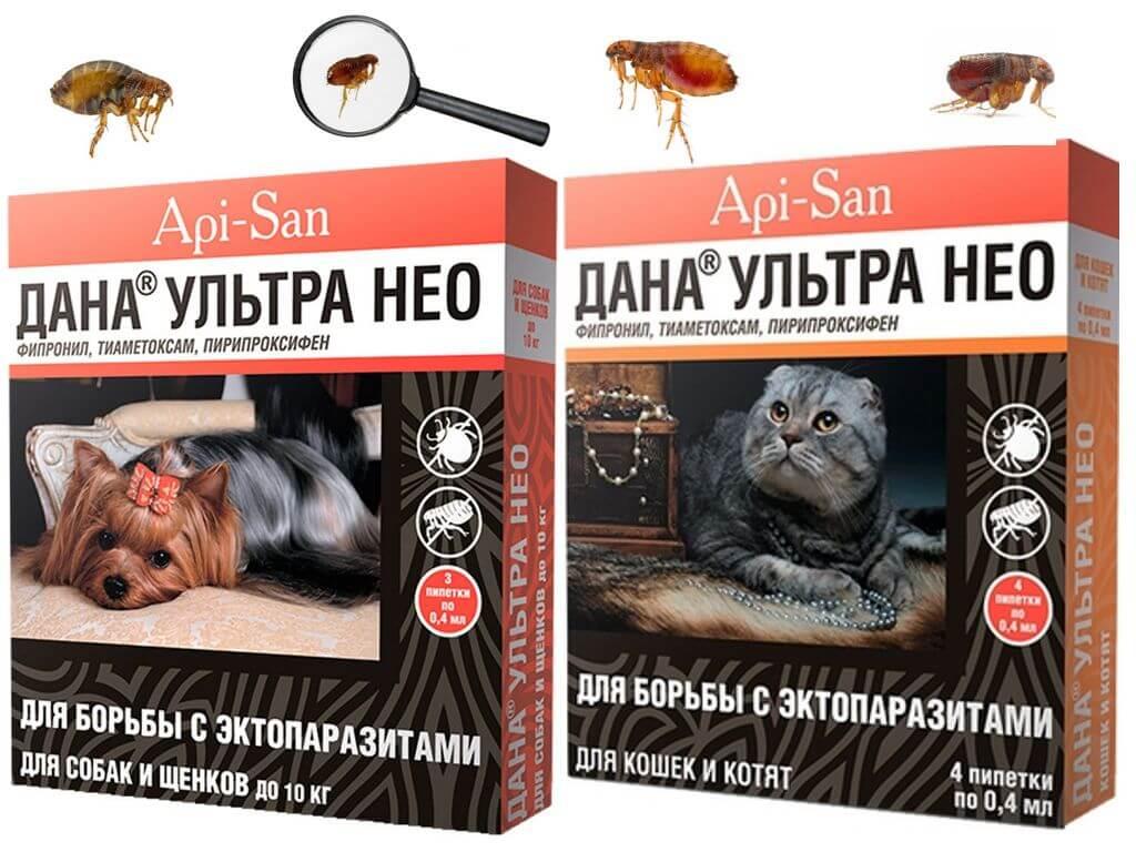 «дана спот-он» для кошек: инструкция по применению, химический состав, отзывы