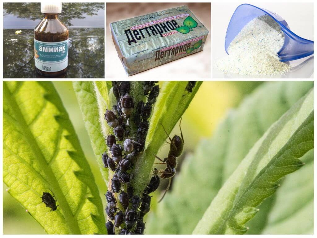 Нашатырный спирт – как применять для подкормки растений и борьбы с вредителями