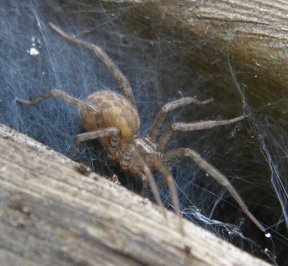 Домашние пауки: популярные виды домашних пауков и можно ли от них избавиться