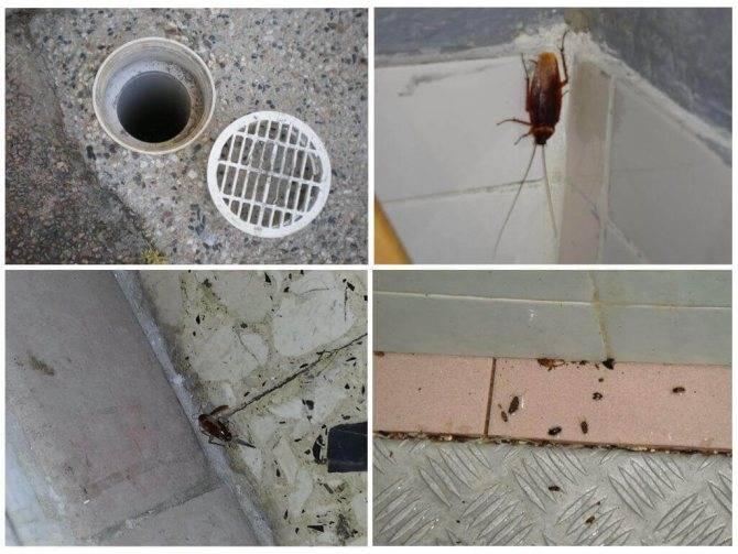 От соседей ползут тараканы что делать и куда обращаться