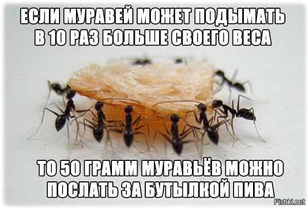 Сколько весит муравей: какой груз может поднять и почему муравьи такие сильные?