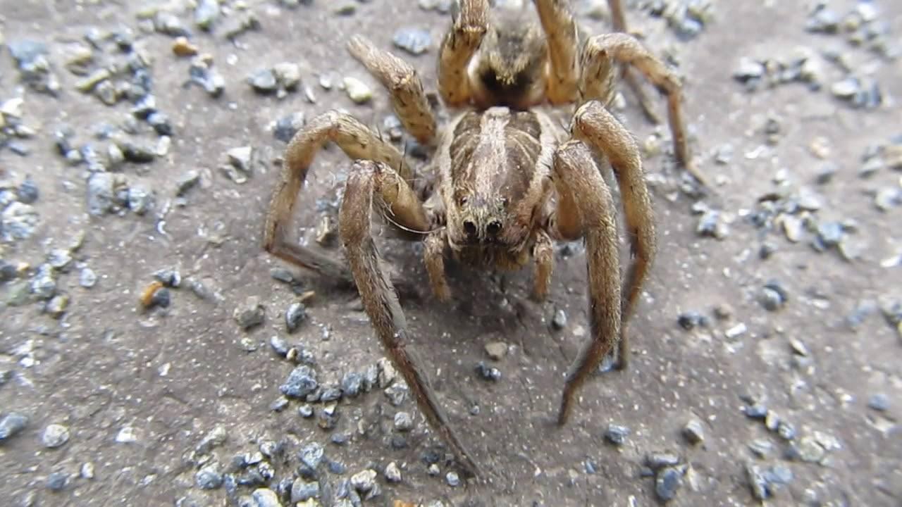Как кусаются пауки: первая помощь в домашних условиях