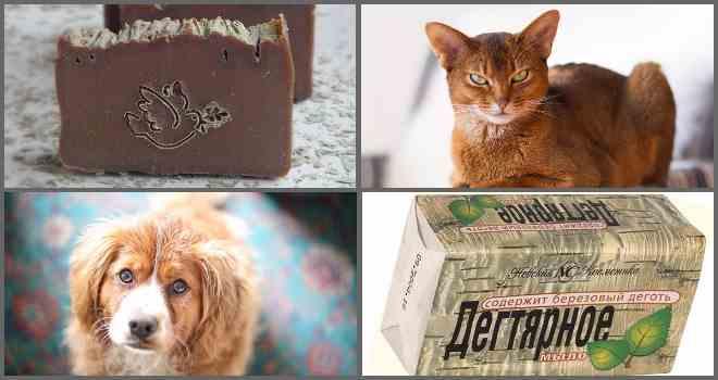 Дегтярное мыло от блох у кошек и собак: состав и применение