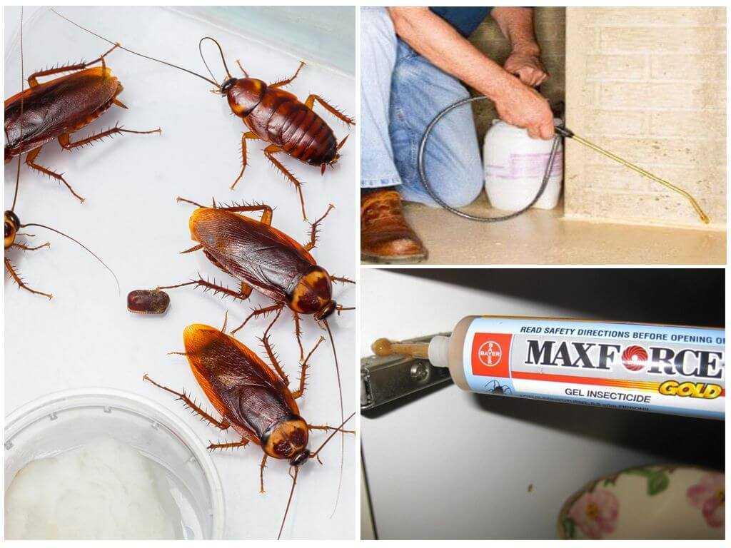 Какое средство от тараканов в квартире самое эффективное