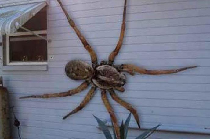 Самые удивительные пауки в мире